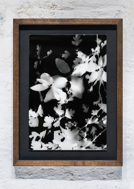 """Sylvan Crop No.9"" Silver gelatine print, 30.5x21cm"